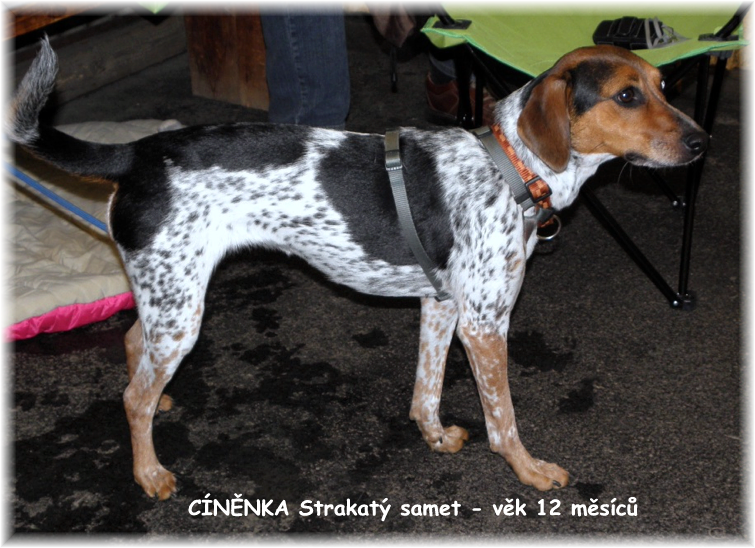 CINENKA Strakaty samet in age of 12 months