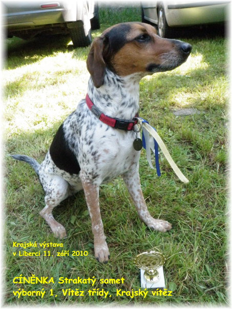 CINENKA Strakaty samet - E 1, Class Winner, Regional Winner - Regional Dog Show in Liberec - 11th September 2010